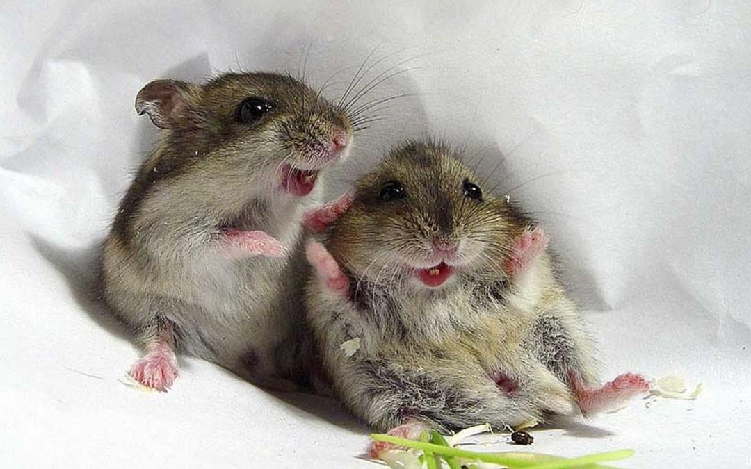 СИП панели и мыши. Дом из СИП панелей цена